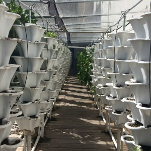 The hydroponic garden produces the equivalent to a traditional one acre farm.